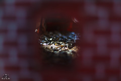 Blick ins Vogelhaus (Josef17) Tags: 50mm blende14