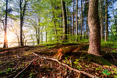 All Natural Forest (Andreas Krappweis - thanks for 1,9 million views!) Tags: light nature colors forest spring sonyalpha850 carlzeissvariosonnart281635mm