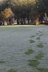 _MG_8359 (sir_mac_alot66) Tags: morning water grass fotografie dew footsteps fotografia tress pathway fotografa   fotograph fotoraflk