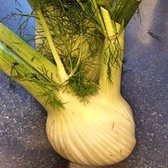 "One of my favorite seasonal vegetables has returned to our dinner menu. I love fennel and will be roasting this bulb tonight to be served with penne pasta for dinner.    Do you like fennel? Do you have a favorite way to prepare and enjoy it? • <a style=""font-size:0.8em;"" href=""http://www.flickr.com/photos/54958436@N05/15401186330/"" target=""_blank"">View on Flickr</a>"