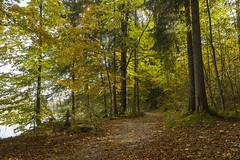 Weg am Weissensee (matthiashn) Tags: autumn lake fall germany geotagged bayern bavaria see path herbst weg weissensee allgu canoneos5d3 ef2470mmf28liiusm