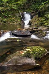 Small Cascade (Howie Mudge) Tags: uk fern tree nature water beautiful wales forest woodland landscape photography waterfall moss woods scenery pretty cymru scenic area cascade gwynedd dolgoch lowpov hiddengem dt1650mmf28ssm ilca77m2 sonya77ii