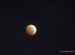 October 8, 2014 - The 'blood moon' lunar eclipse. (Ed Dalton)