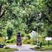© Saint-Cuthbert-2014-Espaces verts aménagés-Parc du presbytère