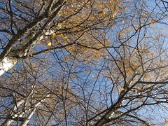 Passejant a la vora de l'estany de Sant Maurici (raquelperamor) Tags: autumn tree nature catalonia catalunya aigestortes tardor pirineu lamanoamiga
