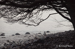 By the sea (KronaPhoto) Tags: tree nature water norway forest waves stones natur tre stein 2012 tnsberg hav vr bakgrunn sj blger bythesea rstider rullestein