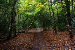 Sutton Park 2014-29 (Andrew Callow) Tags: uk autumn trees red orange green fall leaves forest woodland woods europe raw foliage suttonpark lightroom d600 manualexposure perfectphotosuite 28mm18g