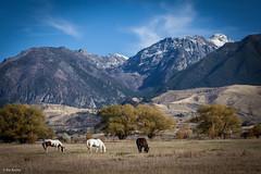 rroche-3019.jpg (bznRic) Tags: horse hiking paradisevalley beartooth absoraka