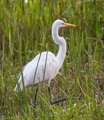 _C5A4158.jpg (Lake Worth) Tags: bird nature birds animal animals canon wings wildlife feathers sigma waterbird wetlands everglades waterbirds southflorida 2xextender 5dmark3