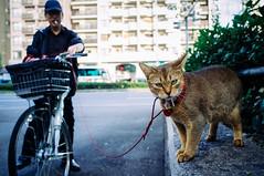 2014_Japan-309 (Onni / Xijia Cao) Tags: life autumn urban japan digital japanese tokyo kyoto downtown fujifilm osaka nara citycenter kurama x100
