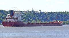 Mapleglen (Jacques Trempe 2,230K hits - Merci-Thanks) Tags: river ship quebec stlawrence stlaurent fleuve navire mapleglen