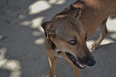 Buen dia de sol (Doncardona) Tags: dogs colombia perros santamarta