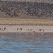 Flamingos na Laguna Huayñakota
