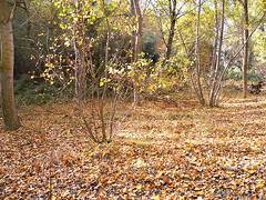 Otoo en Quel (kirru11) Tags: espaa hojas ana rboles camino colores cielo otoo octubre quel larioja panasonicdmcfx7 kirru11 ao2014 paseoporelro