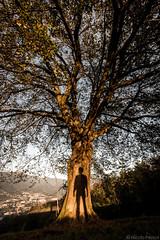 01112014-IMG_4364 (Nicola Pezzoli) Tags: autumn shadow italy nature canon colours nicola ombra atmosphere natura val leffe autunno bergamo 600d pezzoli gandino ceride