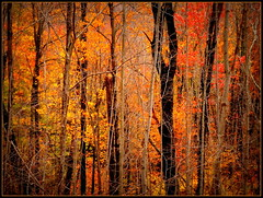 Cold night - need heat (edenseekr) Tags: orange fall foliage flaming