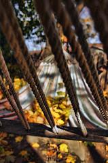 Nov 3 (dtwigg98) Tags: november autumn ontario canada color colour tree fall leaves yard photoshop garden fun back maple pentax hamilton stripe swing adobe hammock sway challenge topaz adjust kx cs5