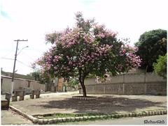 FLores (Hudinho Melo) Tags: flores tree minasgerais brasil plantas selva cerrado sementes rvore mata roa horta biologia flowes hortalias