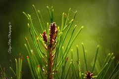 Photosynthesis { Explored } (Terezaki ✈) Tags: travel sun green nature day bokeh hellas greece photosynthesis natureselegantshots