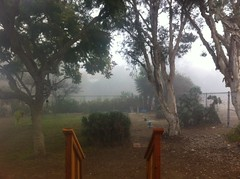 morning fog (artnoose) Tags: california fall fog backyard encinitas 2014