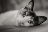 that´s life (susodediego ) Tags: bw cat chat gato katze gatto soe autofocus lúa greatphotographers thegalaxy frameit simplysuperb gününeniyisi olétusfotos hellopussycat nikond7000 vividstriking rememberthatmomentlevel1 magicmomentsinyourlife sigma35mmf14dghsm vpul01 infinitexposure