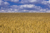Cloudfield (gegenlichter) Tags: blue summer nature yellow clouds germany deutschland nikon sommer natur wolken eifel gelb blau nikkor rheinlandpfalz d40 rhinelandpalatinate afsdxnikkor55200mm