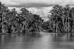 Bayou Chene (Shane Adams Photography) Tags: trees blackandwhite monochrome canon louisiana unitedstates bayou swamp wetlands cypress berwick stmaryparish bayouchene canonrebel3ti ilobsterit