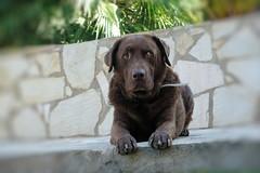 Joy waiting (Gerard Koopman) Tags: dog dogs