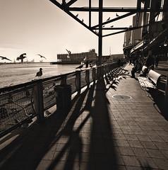 """Street Life"", Along East River Esplanade (sq. crop) (sjnnyny) Tags: toned sonya6000 mirrorless manuallens wideangle nylife eastriver elevatedhighway pathway walkway riverfront brooklynbridge urban city sightsee stevenj sjnnyny seagulls benches birds downtown scenic"