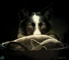 Calm Before The Storm (clabudak) Tags: dog cat mischief calm storm littledoglaughednoiret gününeniyisi thebestofday