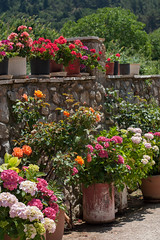 Happy Spring Equinox! (kamphora) Tags: greece steno flowers village sunny