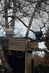 6 - Cabanes dans l'arbre (melina1965) Tags: 2017 février february bourgogne saôneetloire saintvallier burgondy nikon coolpix s3700 winter hiver arbre arbres tree trees