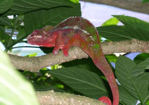 Meraviglie-del-Madagascar-2-2