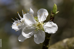 spring-trap - definition and meaning