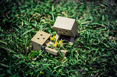 R.I.P. (Vagelis Pikoulas) Tags: danbo toy canon 6d tamron 70200mm vc