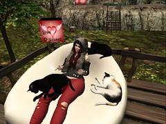 Catitude2 (ღĄηϊʈα ωalkerღ) Tags: cat kitten kitty meow crazy lady friends hanging out random second life secondlife sl snapshot screenshot