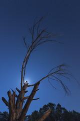 Sculpted by light (eztopo79) Tags: nocturna night canet de mar tree arbre arbol stars full moon luna llena barcelona ursa major osa mayor canon tokina