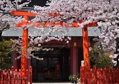 neighborhood small-scale shrine (marionetteMay) Tags: flower cherryblossom shrine