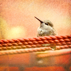 Hummingbird (docoverachiever) Tags: bird orange texture rope hummingbird digitalart backyard nature