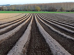 lines for future asparagus (mujepa) Tags: champs culture lignes asperges graphisme terre texture fields lines stripes pattern asparagus landscape perspective