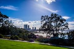 P3238397-Edit Western Australia Perth from Kings Park HDR (Dave Curtis) Tags: 2014 australia hdr em5 kingspark omd olympus places wa westernaustralia