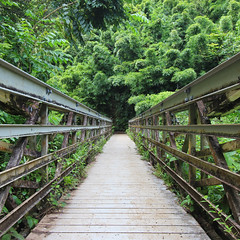Bamboo Forest Hike (russ david) Tags: bamboo forest hike pipiwai trail maui september 2016 hawaii hi haleakalā national park ハワイ 風景