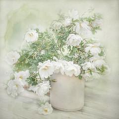 White roses (BirgittaSjostedt) Tags: roses flower still summer texture paint soft highkey birgittasjostedt