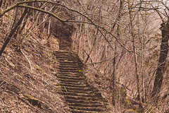 Chimney Rock Trail - Steps along the Whitewater River (Tony Webster) Tags: chimneyrock chimneyrocktrail minnesota whitewater whitewaterriver whitewaterstatepark spring stairs statepark steps saintcharles unitedstates us