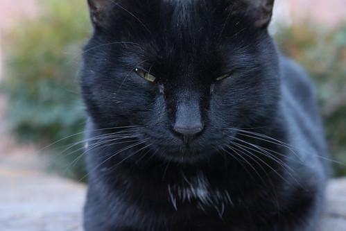 Black Cat 16