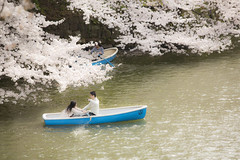 spring date (20EURO) Tags: spring flower cherryblossoms bright warm sunlight season change nature landscape pink blossoms cherry boat fun pond weekend holiday 桜 beautiful photograph lovely cute date デート 青春 千鳥ヶ淵 公園 池 お堀 shine water soft highlight hightone dream