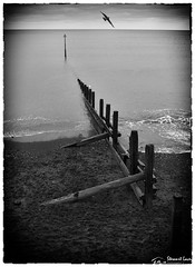 Teignmouth Groynes (stewartl2010) Tags: border vignette grain sea devon beach teignmouth monochrome silverefexpro2 nikfilters seagull portraitformat seascape groyne bw uk shore england unitedkingdom gb