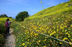 Shooting the Superbloom (Zeetz Jones) Tags: superbloom wildflowers nature ranchopalosverdes portuguesebendreserve superbloom2017 rollinghills southerncalifornia