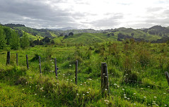 up north (terri-t) Tags: northland nz newzealand aotearoa landscape green clouds nature kaitaia ahipara fence hills backlight scenery meadows grass