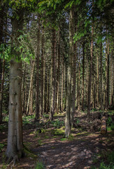woodland (Andrew Lancaster photography) Tags: forrest wood trees nature landscape light bark